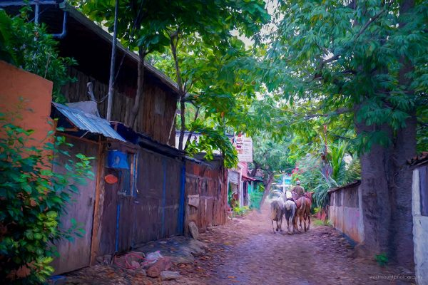 alley-horses-walking-costa-rica-tamarindo-photo-art