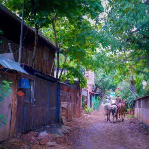 alley-horses-walking-costa-rica-tamarindo-photo-art