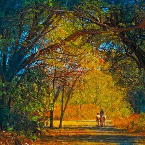 costa-rica-horses-horseback-riding-trail-art-photos