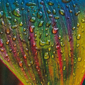 costa-rica-plants-leaf-dew-rain-art-photography