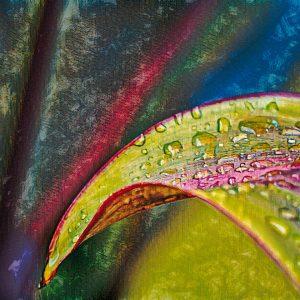 morning-dew-plant-leaf-costa-rica-photo-art